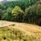 , li_0214, Hochwasser 1998