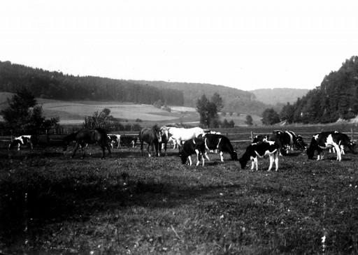 , he_0181, Weide in den Teichwiesen, um 1915