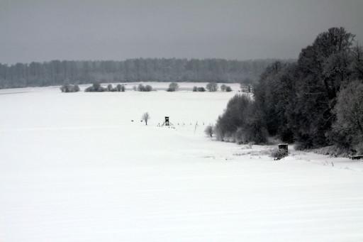, hen_0011, Espol, 2010