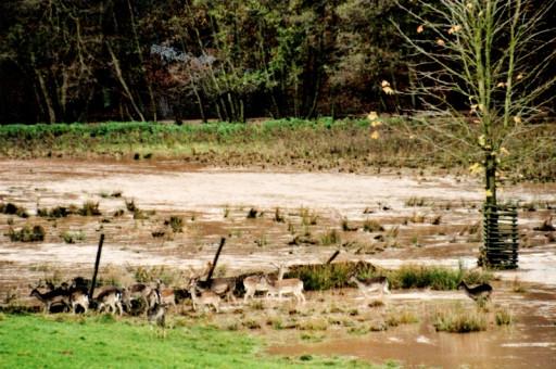 , li_0215, Hochwasser 1998, 1998